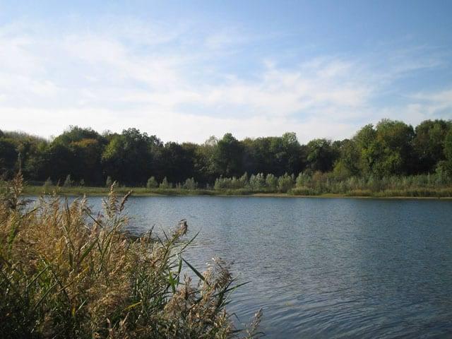 lacs prives nord france les etangs labbaye etang renard heron lac prive oise