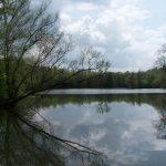 Etang de MarCo – Lac privé – Moselle (57) 3