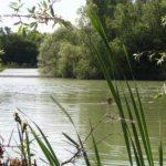 Etang de Nokilus - Lac privé - Côte-d'Or (21) 5