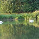 Etang Neuf - Lac privé - Orne (61) 8