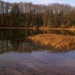 Bassin de Champagney - Grand lac public - Haute-Saône (70) 7