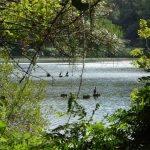 Lac de Carcans-Hourtin – Grand lac public – La Gironde (33) 5