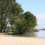 Lac de Biscarosse et de Parentis - Grand lac public - Landes (40) 5