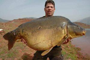 Paulette, la carpe miroir record du lac de Bin el Ouidane a été capturée au poids de 33,4 kilos 1