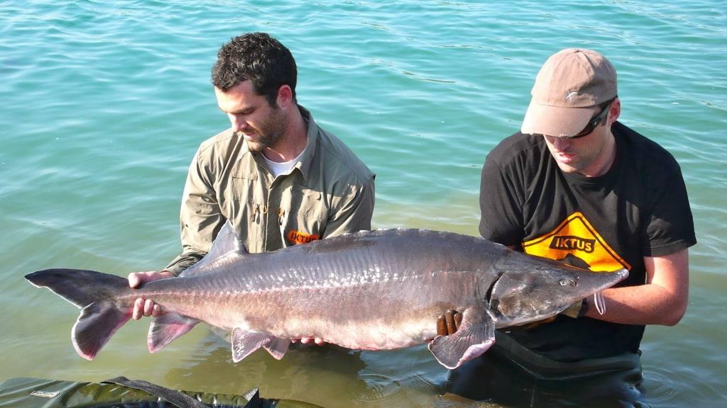 Létang les étangs propres à penze la pêche