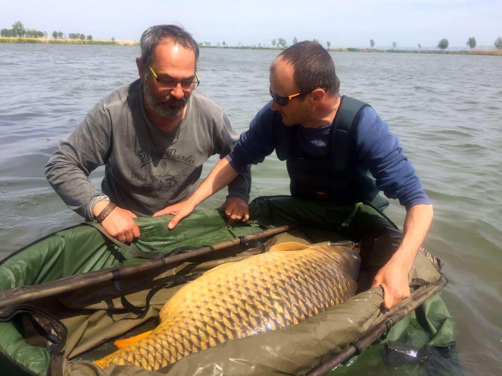 Record commune en roumanie 34 65kgs for Recherche carpe