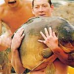 Carpe miroir 35,200 Kgs – Lac de Saint-Cassien – Dave Walker