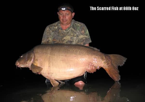 Scarred, la carpe record du lac des graviers capturée par Stuart Arkell : 40,3Kgs 1