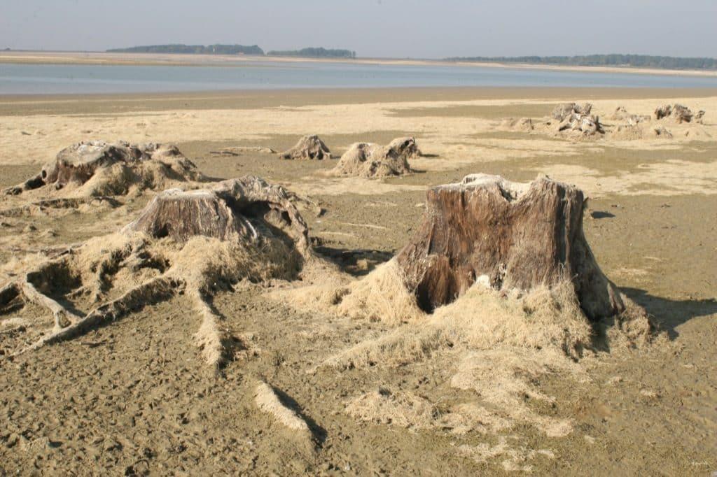 Les souches du lac du Der Chantecoq