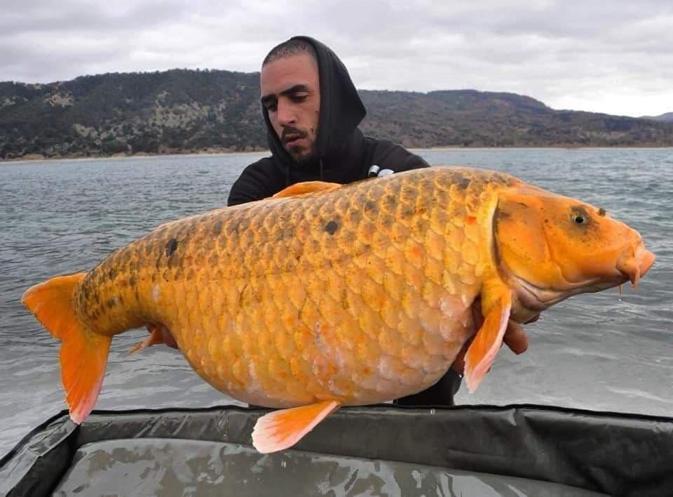 Koï de 17.9kgs entre les mains de Romain Opala