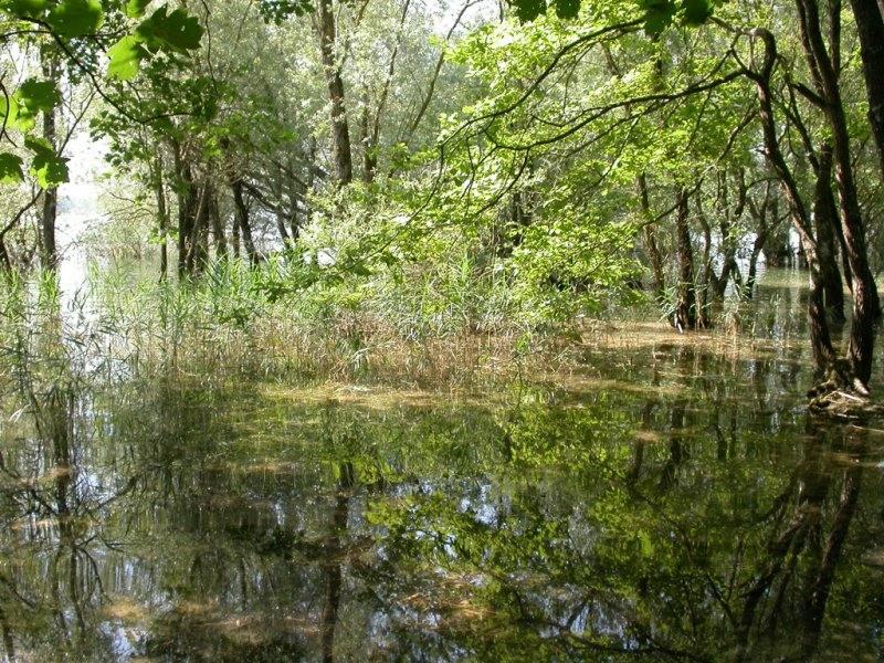 Les sous bois du lac d'Orient