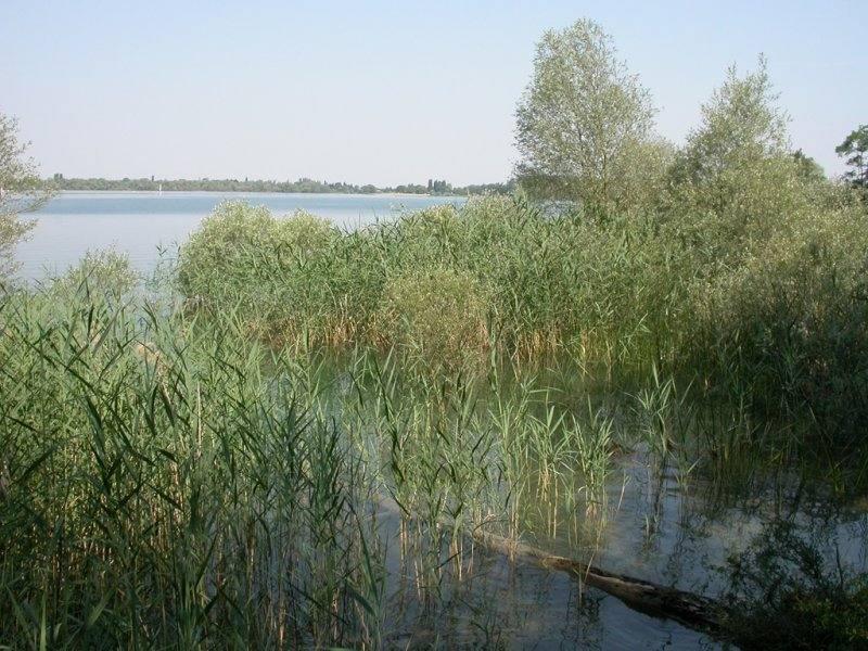 Lac d'Orient - des roseaux à perte de vue