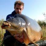 Heron-carpe-33kgs-5