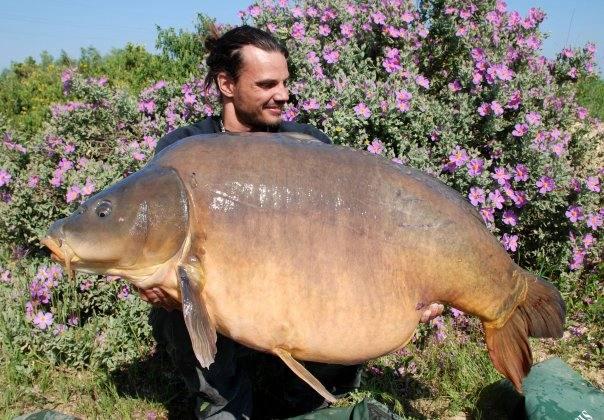 Carpe miroir Nautilus 35,500 Kgs – Raphaël Biagini 1