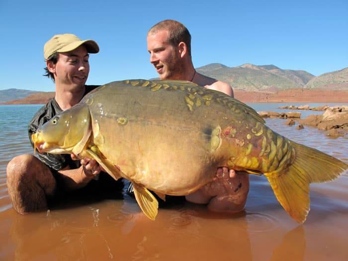 Carpe miroir 30,100 Kgs - Lac de Bin el Ouidane - Maroc - Louis Caillaux 4