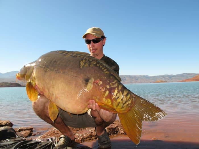 Carpe miroir 30,100 Kgs - Lac de Bin el Ouidane - Maroc - Louis Caillaux 5