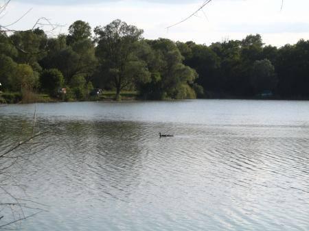 Etang de Nokillus - Lac privé - Côte-d'Or (21) 7
