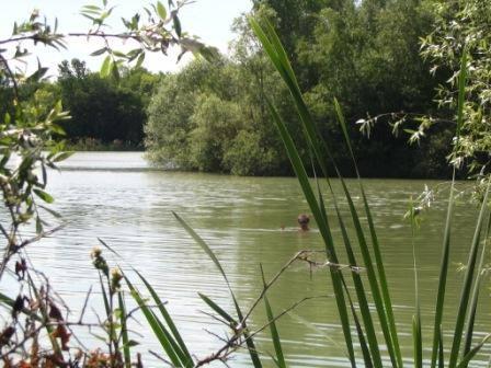 Etang de Nokillus - Lac privé - Côte-d'Or (21) 9