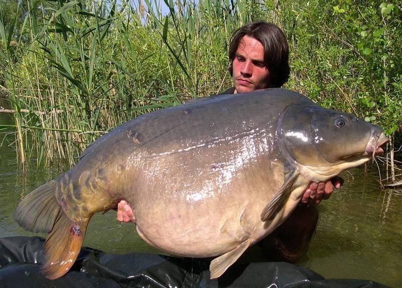 Carpe miroir 30,100 Kilos – Lac public non communiqué – Raphaël Biagini 2