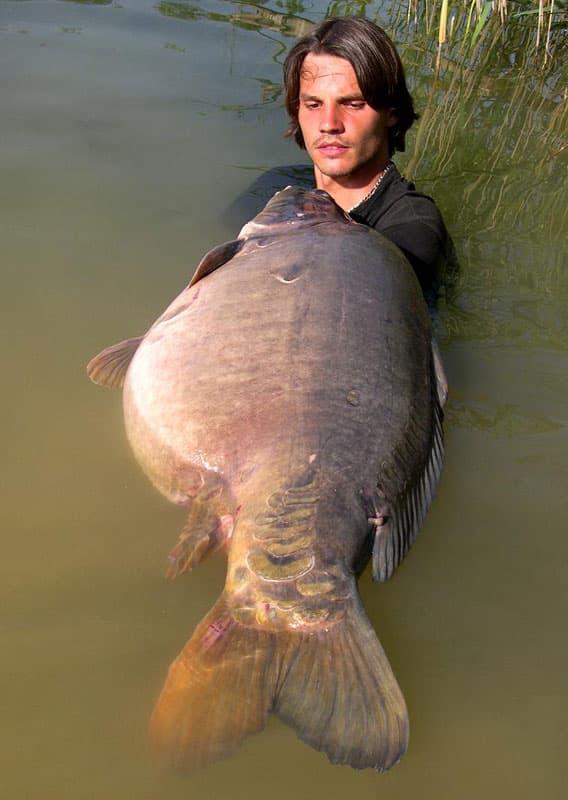 Carpe miroir 30,100 Kilos – Lac public non communiqué – Raphaël Biagini 4