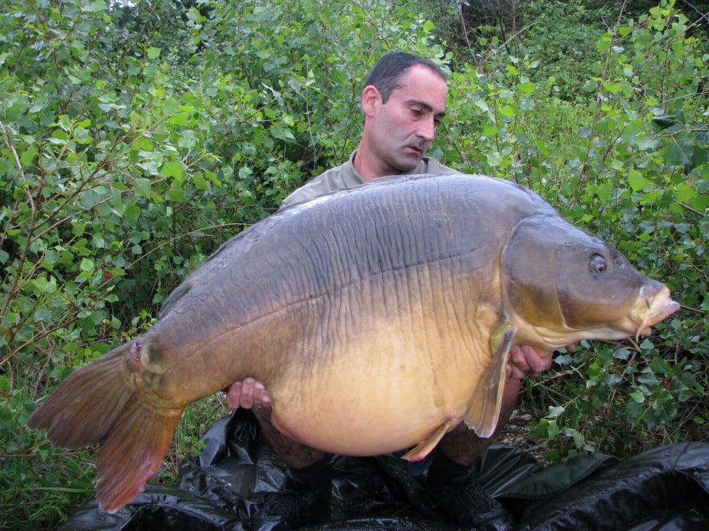 carp and carper Carp wars: the ultimate carp fishing challenge filmed at the fryerning lake in essex this is a showdown between an obesessive carper who owns his own lake.