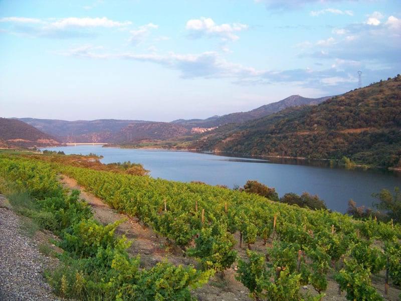 Lac de Caramany - Grand lac public - Languedoc Roussillon (66) 4