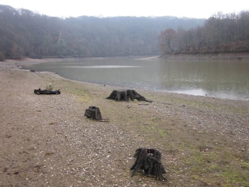 Lac de Mervent et ses souches d'arbres