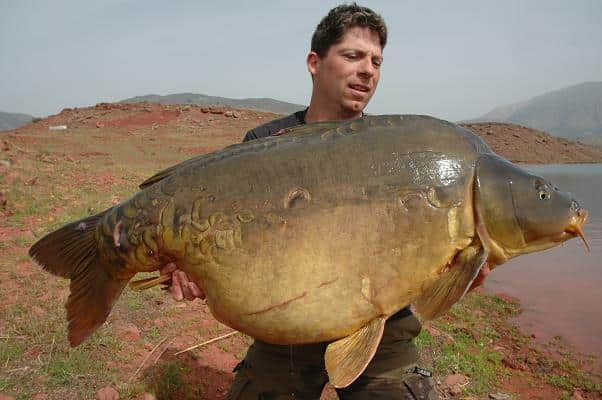 Paulette, la carpe miroir record du lac de Bin el Ouidane a été capturée au poids de 33,4 kilos 2