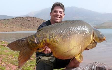 Paulette, la carpe miroir record du lac de Bin el Ouidane a été capturée au poids de 33,4 kilos 4
