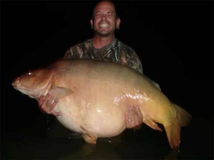 Nouveau record du monde : carpe miroir de 46,1 kilos (101 lb 4 oz) 2