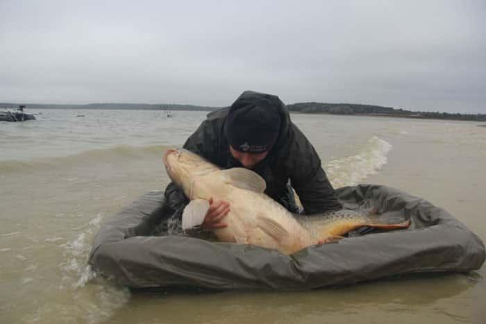 La commune star du lac du Der capturée à son poids record : 35,8kgs 4