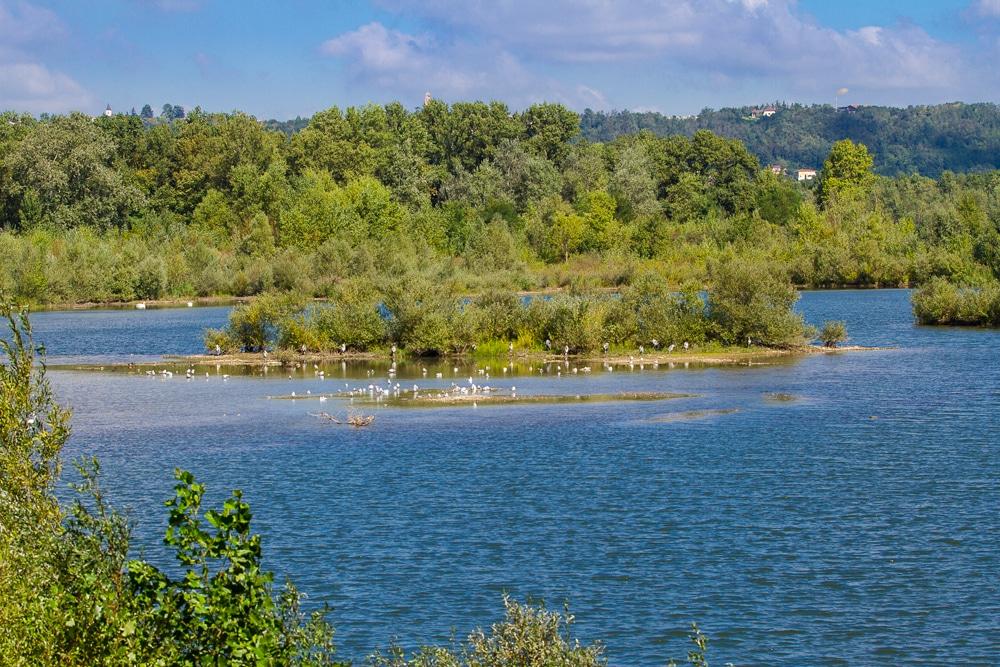 Végétation luxuriante du lac des Eaux Bleues - Miribel Jonage