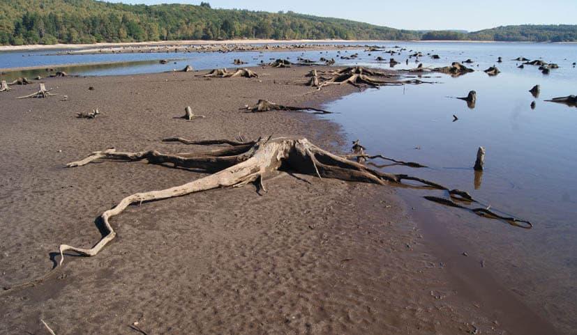 Les souches du lac de Vassivière