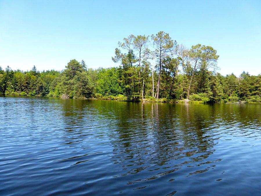 Les berges de l'étang de Ruffaud