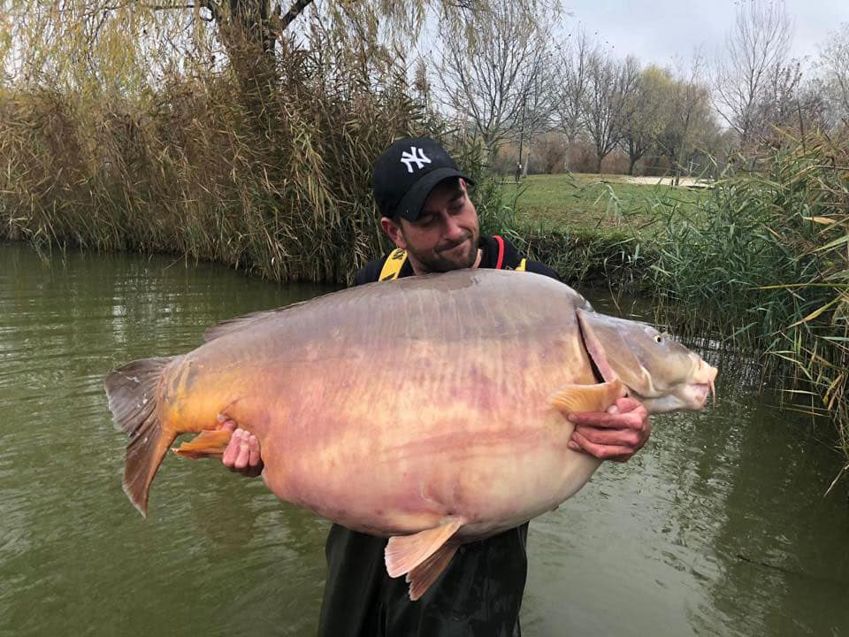 Carpe miroir 51,200 Kilos – Lac privé Euro Aqua – Michel Schoenmakers 3