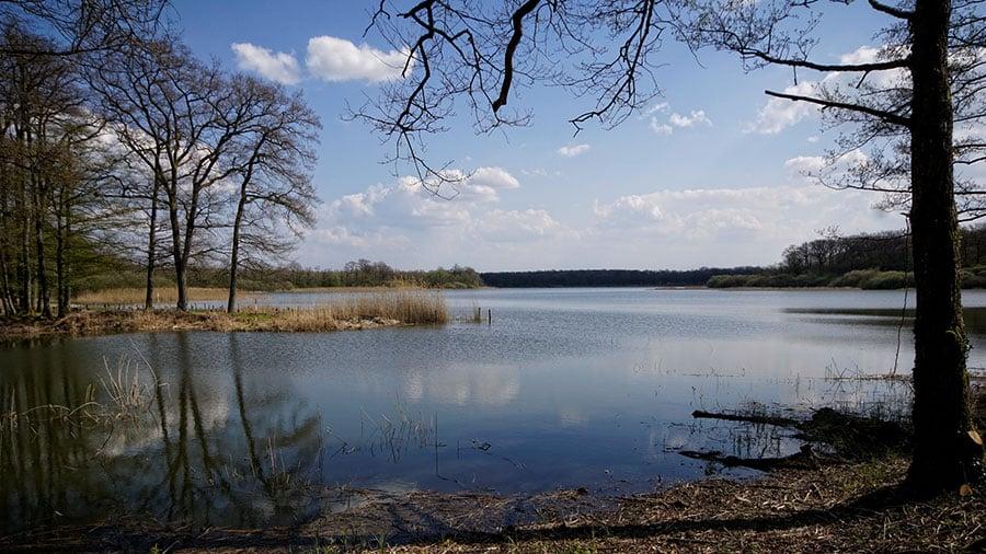 Etang de Gondrexange – Grand lac public – Moselle (57) 3
