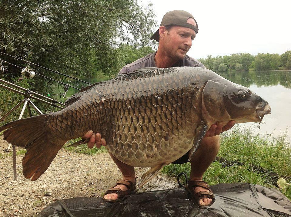 La vieille commune 20 kilos Iktus carp