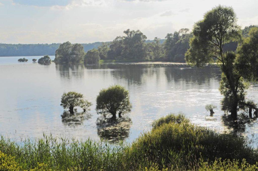Lac d'Orient - végétation luxuriante