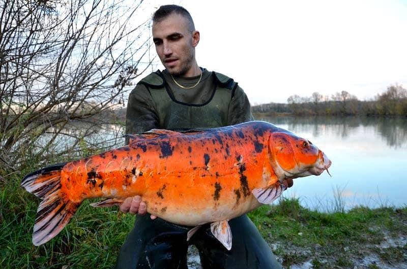 Etang le Prunet - CarpaSens - Lac privé - Yonne (89) 6