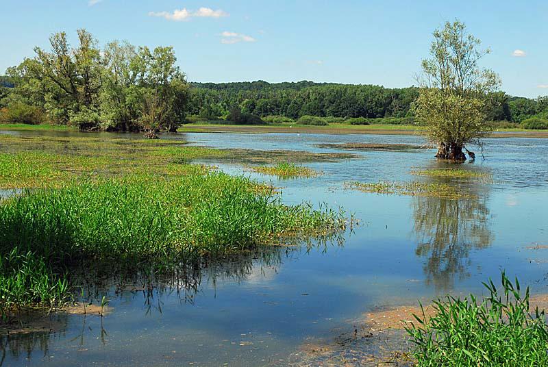 Marécages du lac de la Vingeanne