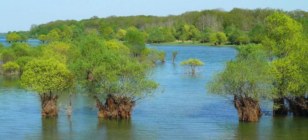 Végétation luxuriante du lac du d'Auzon-Temple