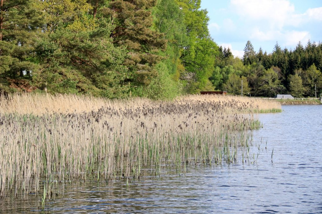 Berge de l'étang de Chancelade