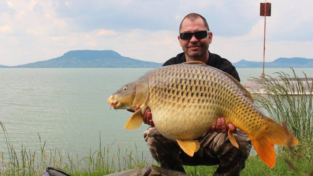 Carpe du Lac de Balaton