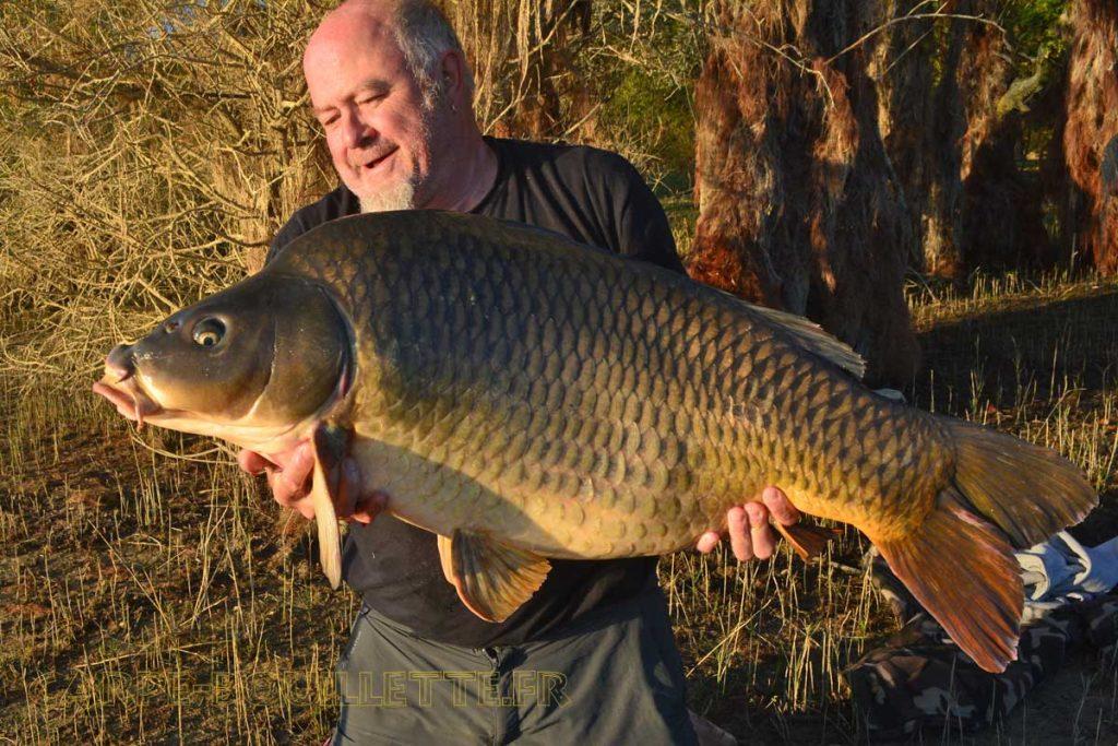Carpe commune de 24 kilos du lac de Montbel