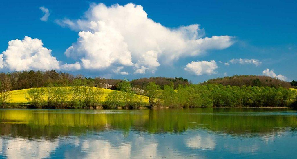 Berges boisées du lac de Montbel