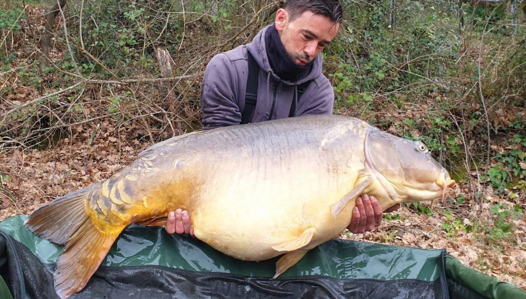 Carpe miroir 38,2 kilos record France par Nico Wald