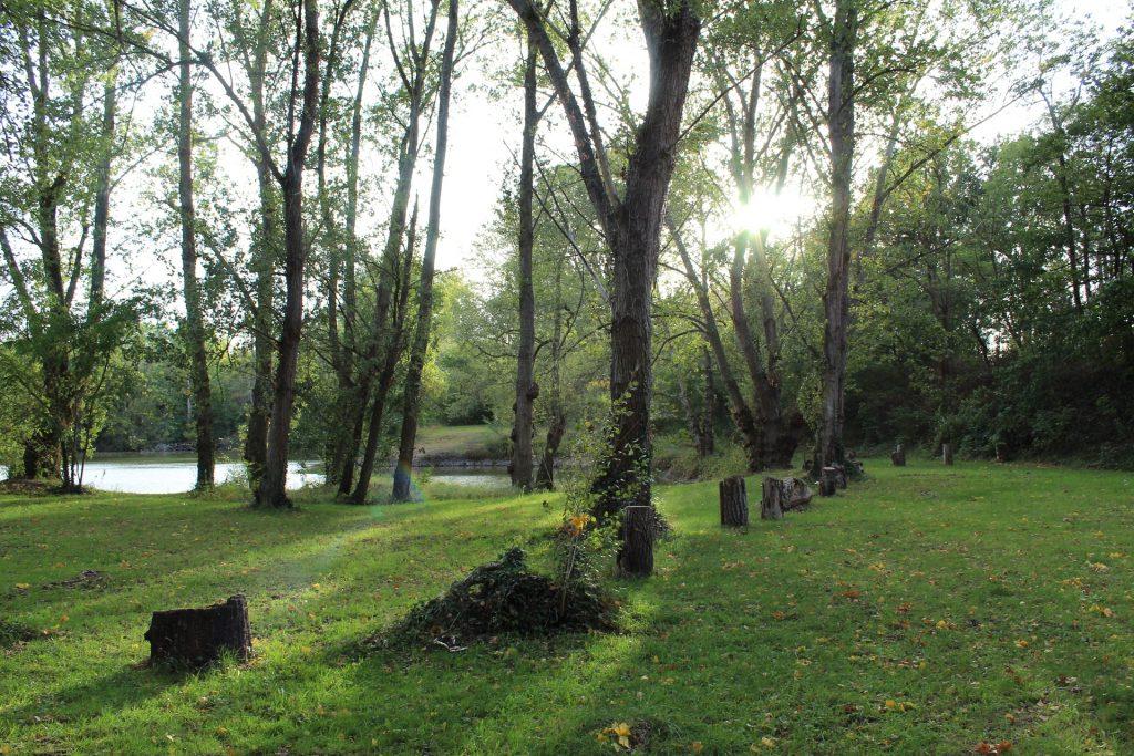 sous bois de l'étang de la Grande Ile