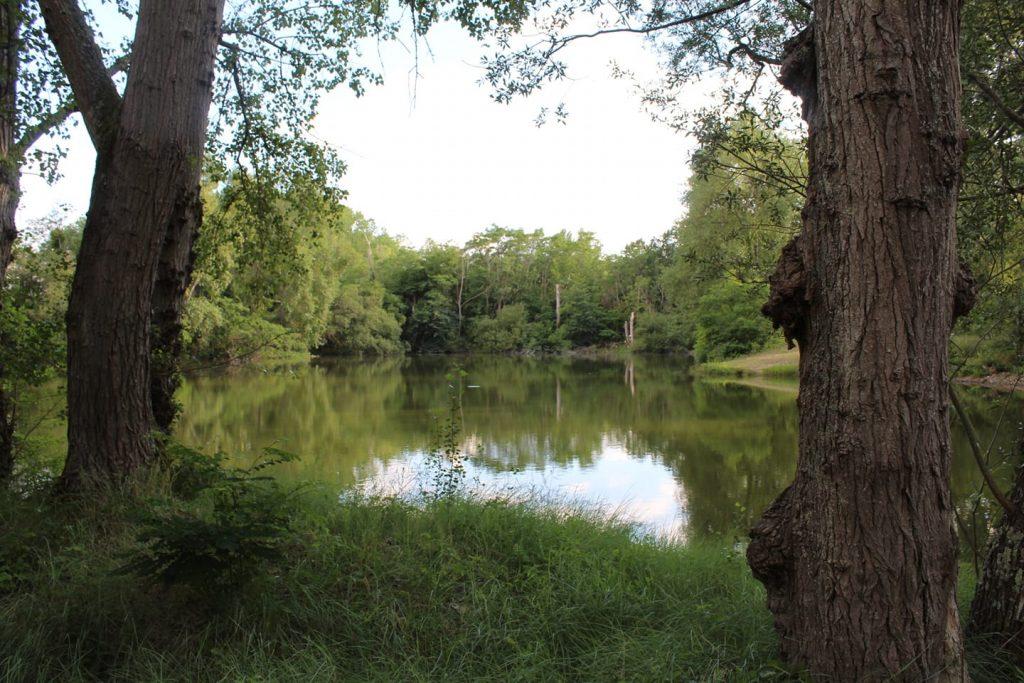 Etang de la Grande Ile – Lac privé – Loiret (45) 6