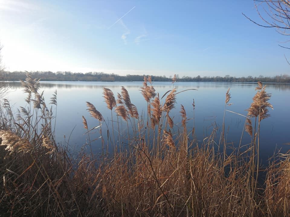 Vue sur l'étang de la Patellerie